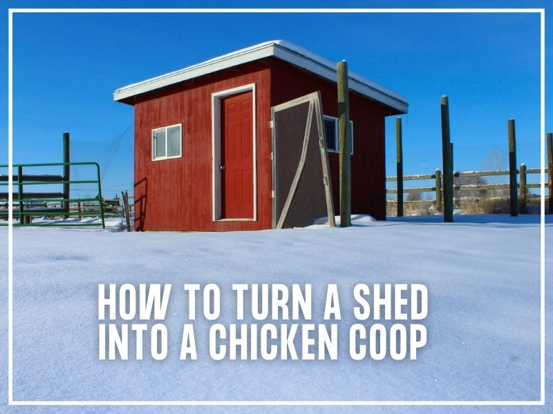 How to Turn a Shed Into a Chicken Coop