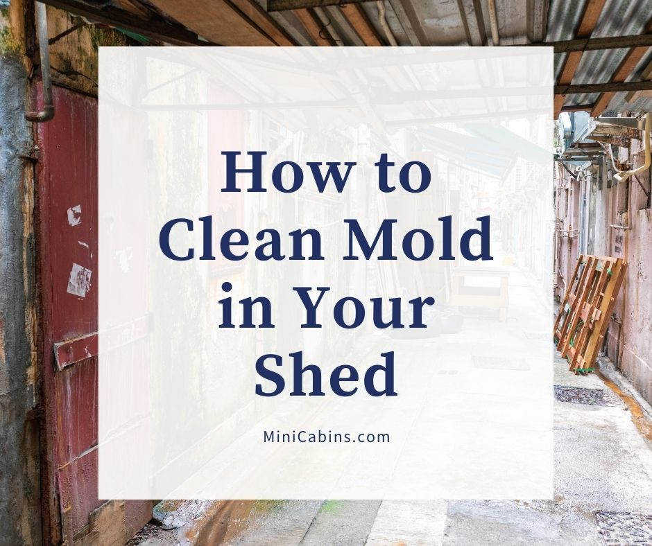 How to Clean Mold in Your Shed